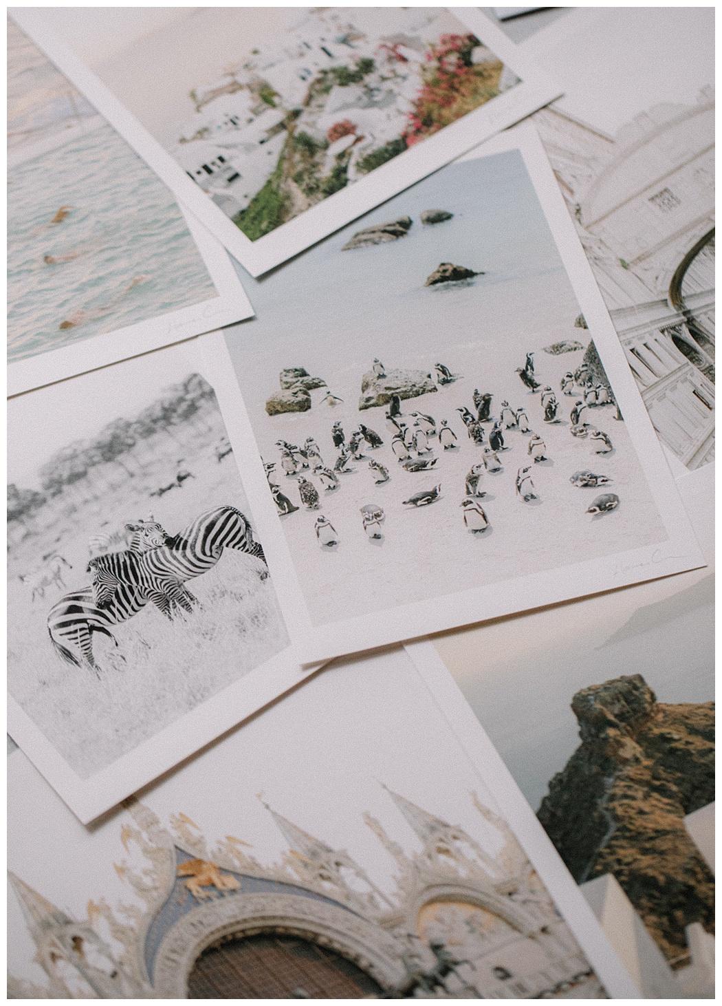 Holly Clark Editions - Fine art print shop - Boulders Beach Penguins